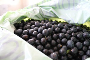 The sloes