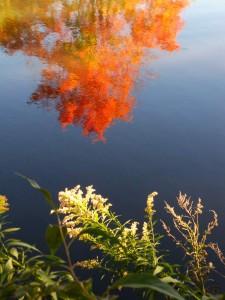 Autumn Abstract 14
