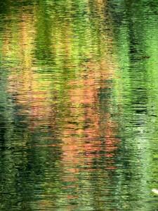 Autumn Abstract 8