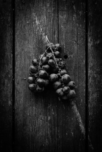 Fresh-Harvest-Series-11
