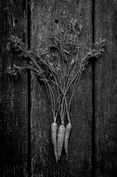 Fresh-Harvest-Series-13