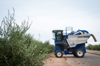 PR-Farms-Olive-Harvest-6