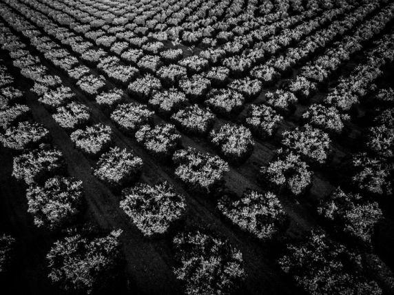 Textiles-0004