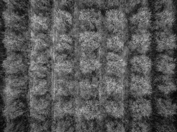 Textiles-Oranges-0337