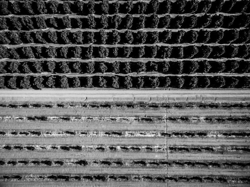 Textiles-Oranges-0507