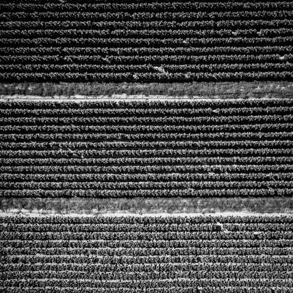 Textiles-Tobacco0463
