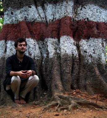 Sacred Banyan Tree, Bangalore, India