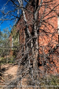 Abandoned Building South of Stamford, Texas - hidden by the trees