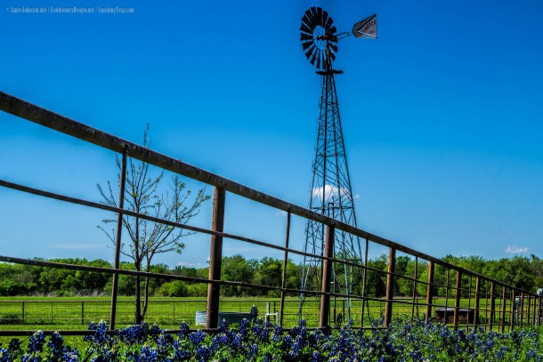 The Ennis Bluebonnet Trails in Ennis, Texas