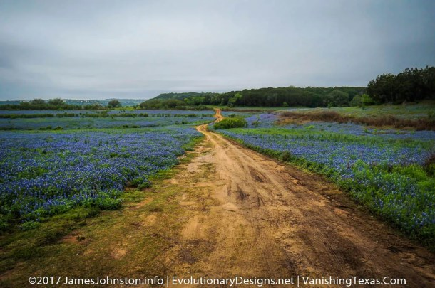 A Field of Bluebonnets in Mule Shoe Bend - Texas Landscape Pictures
