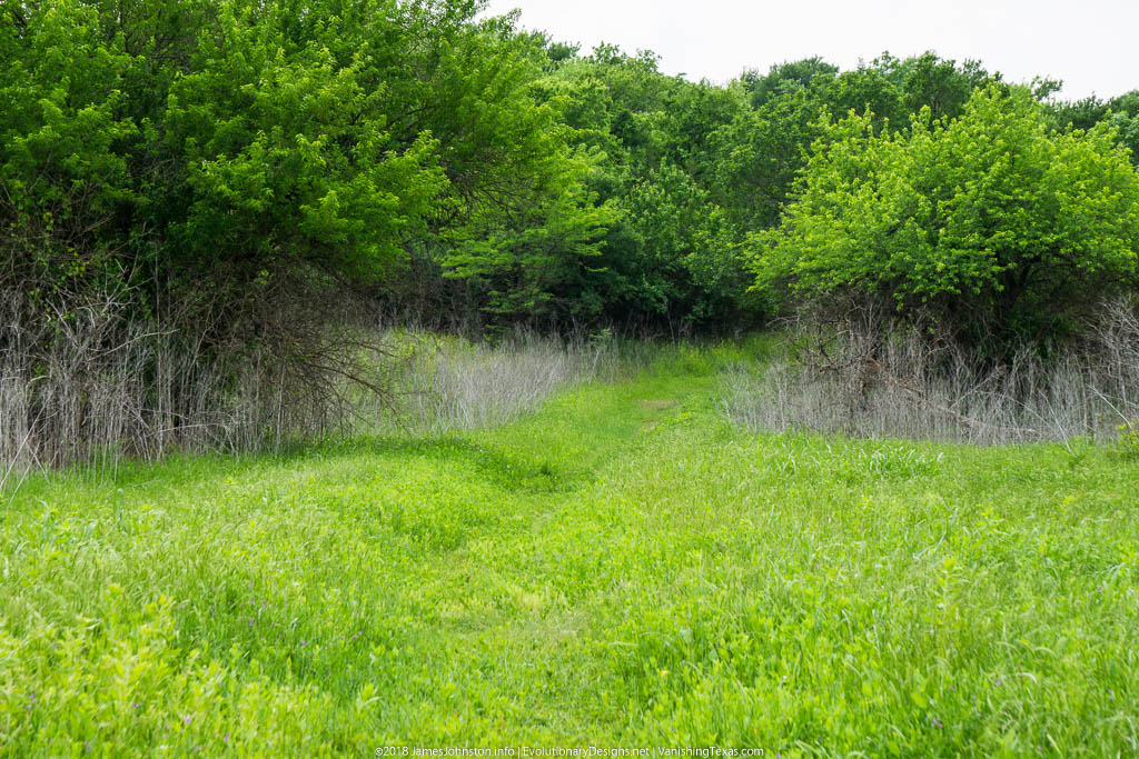 Crow Hill Trail – Hagerman National Wildlife Refuge – Trail Leading from Parking Lot to To Trail Head