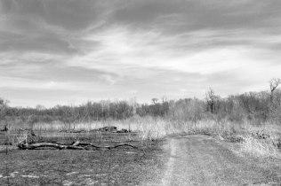 4-19-2014_Oak Ridge Forest Preserve (61)