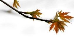 Leaves1_PP