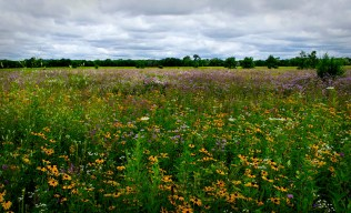 Afternoon on the Prairie_1