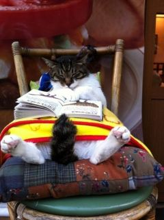 Cat- With a Book 3