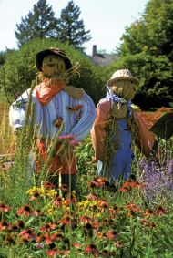 Scarecrows Working in the Field