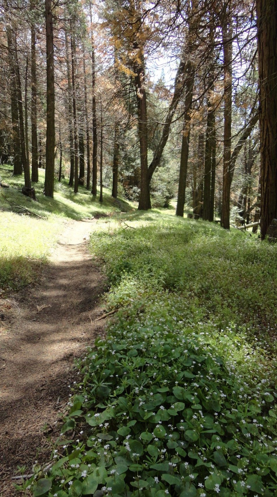 Portuguese Pass Trail