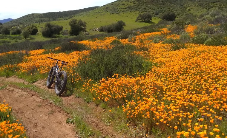 stowe trail and poppies, san diego 2