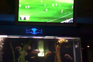While Graeme watched the footy, I watched the fish in the tank below.
