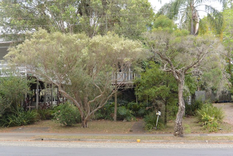 """The house behind the trees was once home to """"Double Dutch"""", Lismore's first gay-owned and operated restaurant, and which was very much a home to Lismore's gay community during the 1980s. Later, the house became a residence for a couple: Les and Russell. Yes, South Lismore really did change!"""