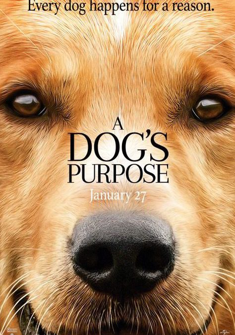 A Dog's Purpose in theaters now