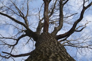 Courtesy photo. On Saturday, March 15 the Audubon Center & Sanctuary will be taking a field trip to SUNY Fredonia's College Lodge and Lily Dale to visit some of the oldest trees in Chautauqua County.