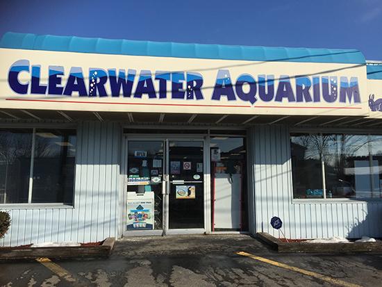 Clearwater Aquariun copy