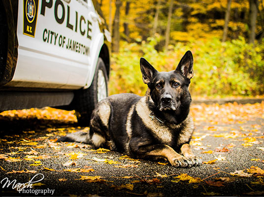 K9 Officer Mitchell posed for a photo in 2015 for Matt Marsh of Marsh Photography.