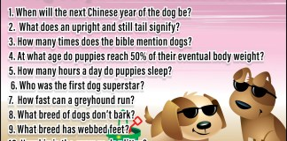 Dog Days of Summer Trivia