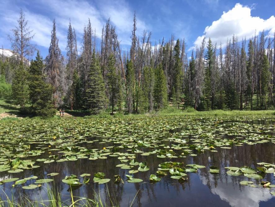 Lily Pad Lake . Summit County