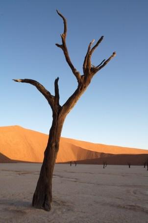 Dead Viel, Namibia