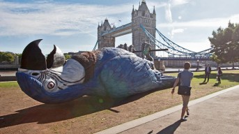 Monty Python's Dead Parrot rests in a London park to celebrate the reunion of the team after 50 years.