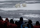 Mother and cubs, Canadian Arctic