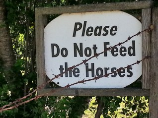 Hungry horses... Sonora CA