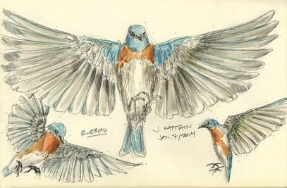 'Bluebird' (2014) by Jamie Kapitain