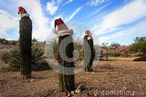 christmas-cactus-desert