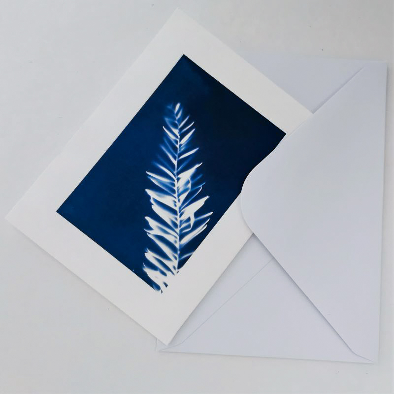 Merry Christmas card printing with the ancient technique of cyanotype or printing with the sun