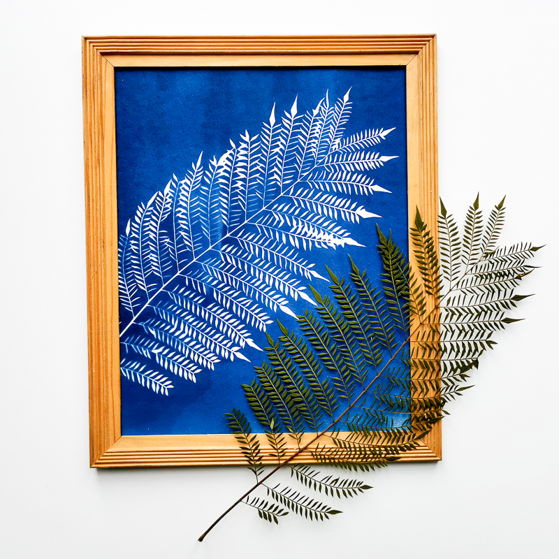 Jacaranda leaf printing with the ancient technique of cyanotype or printing with the sun