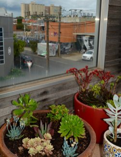 JamJar Coworking rooftop garden - Collingwood sustainable coworking space