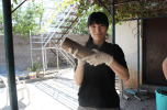 CRHP visitors from the Japan Evangelical Lutheran Association make paper logs for cleaner burning in the kitchen.