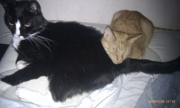 Sippo och Tindra ligger i sängen och gosar.