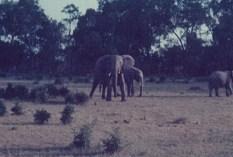 Masai Mara - Kenya 1980 (Original)