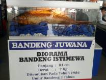 diorama bandeng juwana
