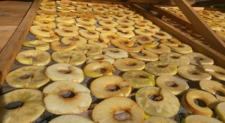 Apfeltrockner