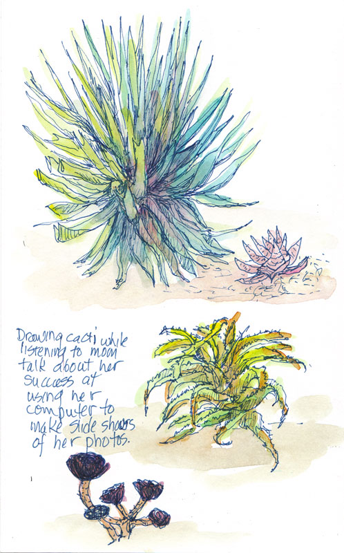 Cacti, ink and watercolor