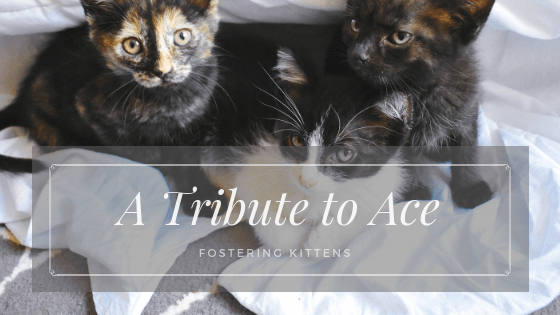 My First Experience Fostering Kittens