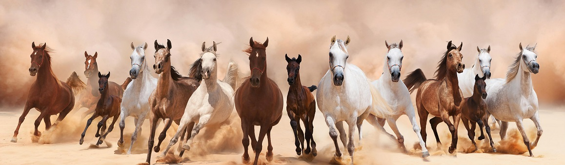 Horses Running smallest jpg