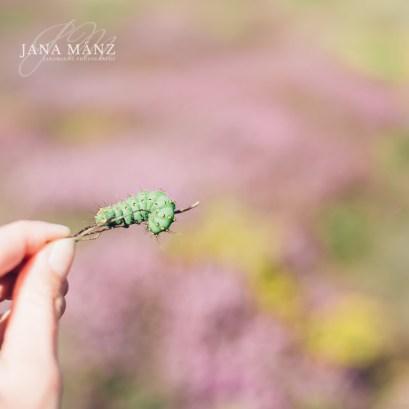Fotografie Onlinekurs Im Einklang mit der Natur: Mit kreativen Motiven zu mehr Ruhe und mit friedvollen Bildern vom Alltag entspannen