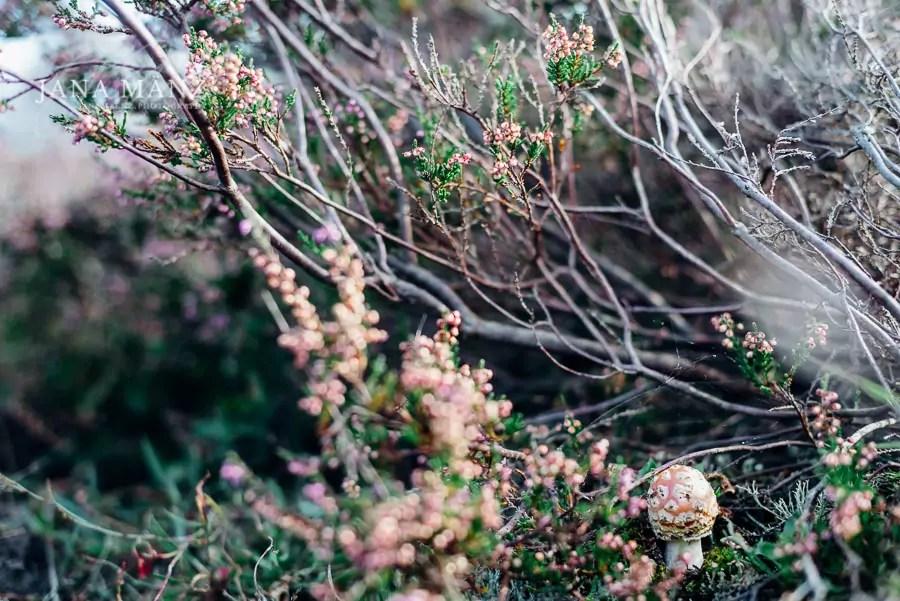 25.8. Blütenträume 2018 Heideblüte Dahlener Heide 10:00 – 18:00 UhrDie Heide in Niedersachsen kennt fast jeder. Aber wusstest du, das es in Sachsen ebenso wunderschöne Heidelandschaften gibt. Ich entführe dich in die Dahlener Heide.