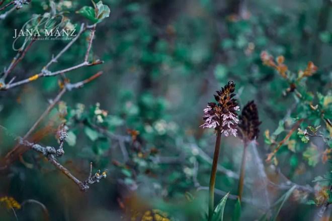 Wilde Orchideen – die wahren Königinnen unter den Blumen